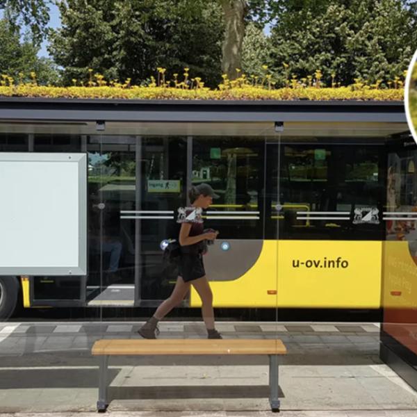 Utrecht 316 otobüs durağını arıların sevdiği çiçeklerle donattı